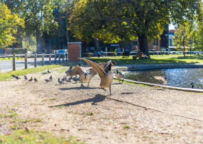 Location Photography clapham common pond geese