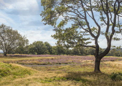 Location Photography wimbledon common